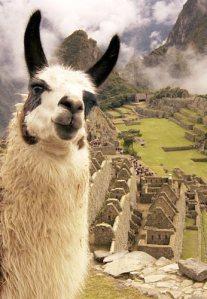 Llamas and Machu Picchu
