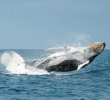 Puerto Lopez whales
